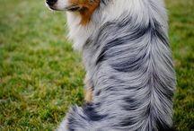 Cute puppy / Cute