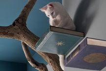 ideas for kitty