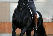 černí koně