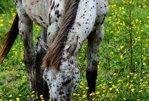horseys / A girls best friend