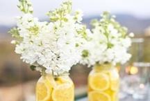 Wedding / by Michelle Shaffer
