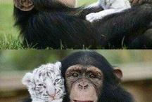 Monkey love / by Kirralee Wilson