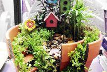 Mini haver / haver i potter og beholdere