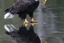 Eaglesgold