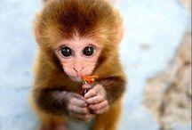 Monkey<3