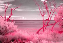 <3 Everything Is Better Pink <3 / by Janalene Evitts