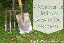 Inspiração: Jardinagem