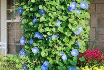 tanaman merambat / climbing plants