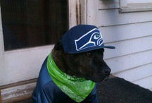 Seattle Seahawks / by Patrina Sims