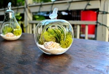 Decorating with Tillandsias  / Cool ways to decorate with air plants / by Air Plant Design Studio