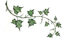 ivy flowery