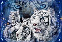 tiger bling, ym...