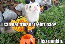 Things that remind me of my Ferret son, Izzy<3