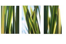 My Photography - Print Sets / flower photography.. print sets