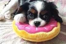 soooooooo cute!!!!!