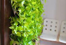 Green Walls @ Cabinet de Avocatura / Green Walls @ Cabinet de Avocatura