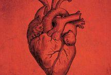 ● Lo que habita en el... / Corazón.