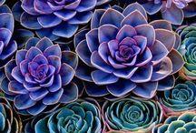 Farbiger Blumen Modus
