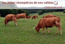 Ils l'ont dit / citations, belles phrases sur l'élevage, les paysages et la viande.
