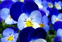 Blue Flower Garden / Surround your water feature with beautiful blue flowers.