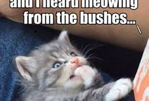 Funny sayings & pictures