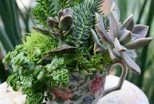 Garden in a cup