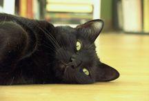 Gatos Negros Son Buena Suerte / ¿Sabías que los gatos negros lo tienen más difícil para encontrar casa solo por su color? Nosotros somos admiradores de los gatos negros, porque Los Gatos Negros Son Buena Suerte!