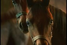 The love of horses / by Michelle Lockard