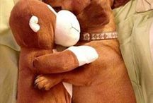 Roman the doxie we love / by Tina Findlay