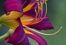 Ritka virágok