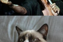 Grumpy cat.. makes my day. :) / by Megan Ottinger