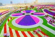 Miracle Garden a Dubai / 01 gennaio 2015 - Dubai Miracle Garden: situato all'interno del deserto Arabico è il giardino più grande del mondo.