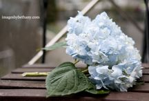 Blue - my favourite colour
