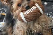 Football dogs / Hockey dogs / Dog sports fans