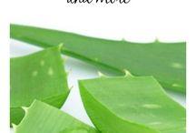 About Aloe Vera