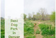 Colorado - Dog Friendly / Dog Friendly places to visit in Colorado