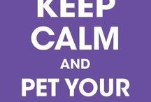 keep calm and... / by Rachel Matthews