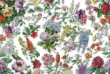 Exotic Botanicals / Our latest collection features beautiful sketched Florals, Tropical Palms, Living Walls, delicate Butterflies and much more!  Rock the #Greenery Trend and bring the outside - indoors with our stunning Fabrics and Wallpapers.
