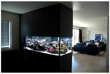 Fish Tank - Tanks