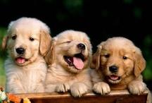 Favorite pet!! :)