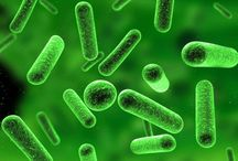 Building a Healthy Gut Microbiome