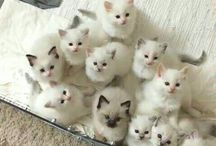 Cute kittens..aww