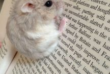 Adorable Readers / Animals caught reading