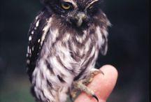 Owl uilen