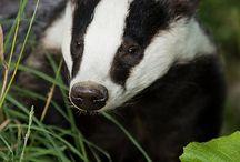 Mammals of the UK / Sightings and photos of British wildlife