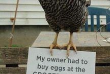 ok fine I did it...Chicken board. Don't judge me.