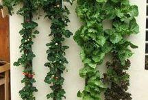 Jardim / Horta vertical