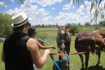 Horses / Horses give us their Freedom. We play polo with beautiful and well tame horses. We enjoy them. We love them. They have fun playing. They understand the game. And we fusion into each other. #PoloHorses #PoloArgentino #CriolloHorses #PoloPonies