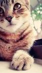 Cutest animals EVER! / by Valerie Williamson