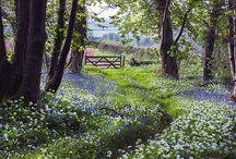 Wildblumen und Landschaften ,Wildflowers
